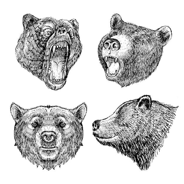 картинка голова медведя за кустом уверены