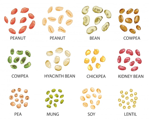 Set of hand drawn colored beans seeds Premium Vector