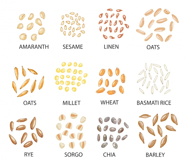 Set of hand drawn colored cereal grains. Premium Vector