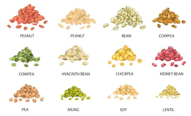 Set of hand drawn colored piles of beans seeds. Premium Vector