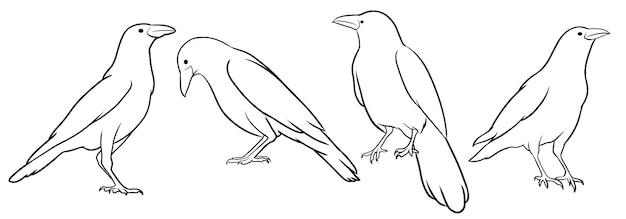Set of hand drawn crow Premium Vector