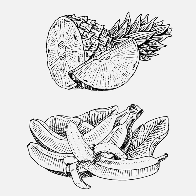 Set of hand drawn, engraved fresh fruits, vegetarian food, plants, vintage looking bananas and pineapple. Premium Vector