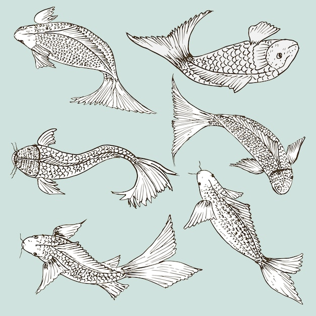 Set of hand drawn fish, healthy food drawings set Premium Vector