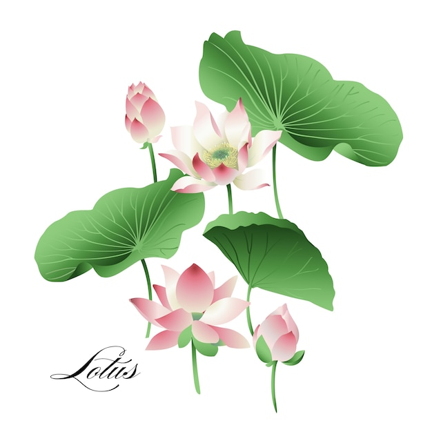 Set Of Hand Drawn Lotus Flowers And Leaves Watercolor Vector