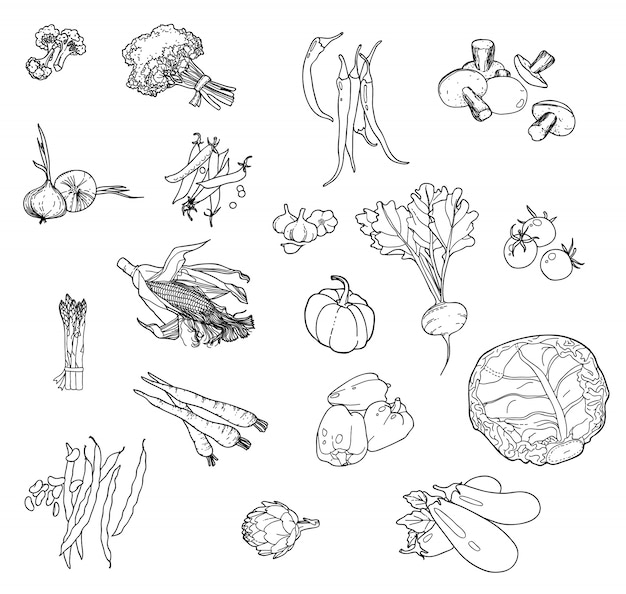 Set of hand-drawn vegetables for your design. Free Vector