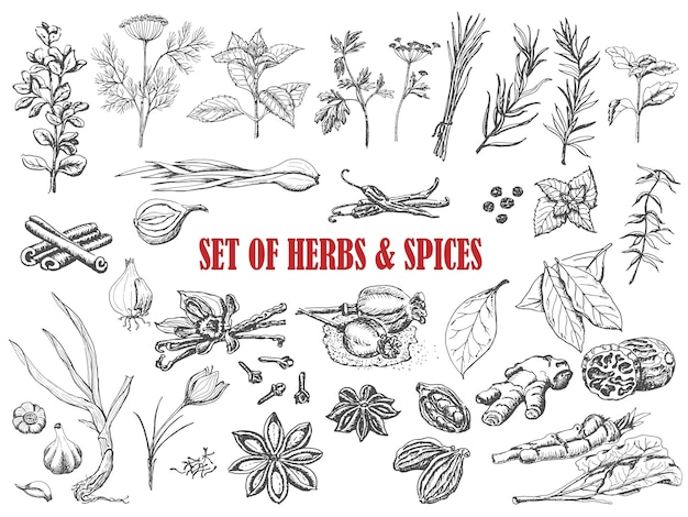 Set of herbs and spices in sketch style Premium Vector