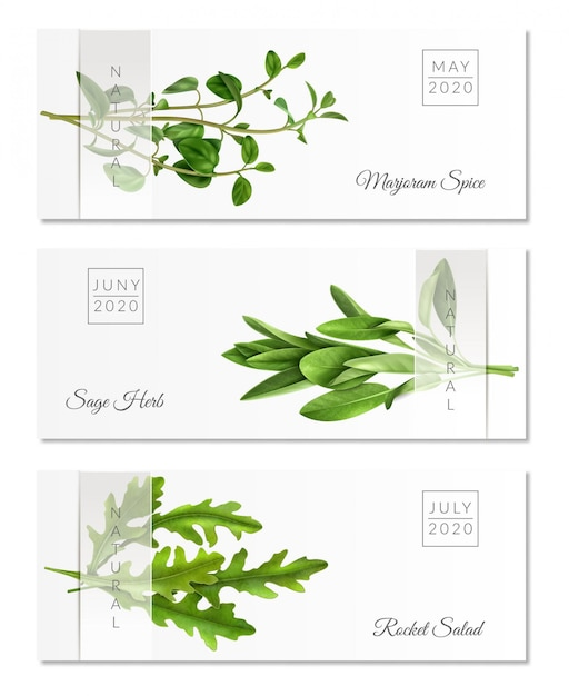 Set of horizontal banners with realistic herbs on white  with transparent ribbon isolated Free Vector