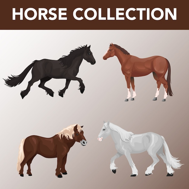 Set of horse breeds collection Premium Vector