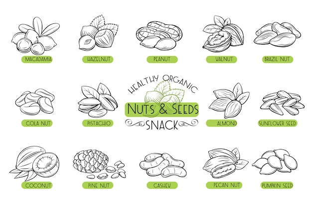 Set  icons nuts and seeds. Premium Vector