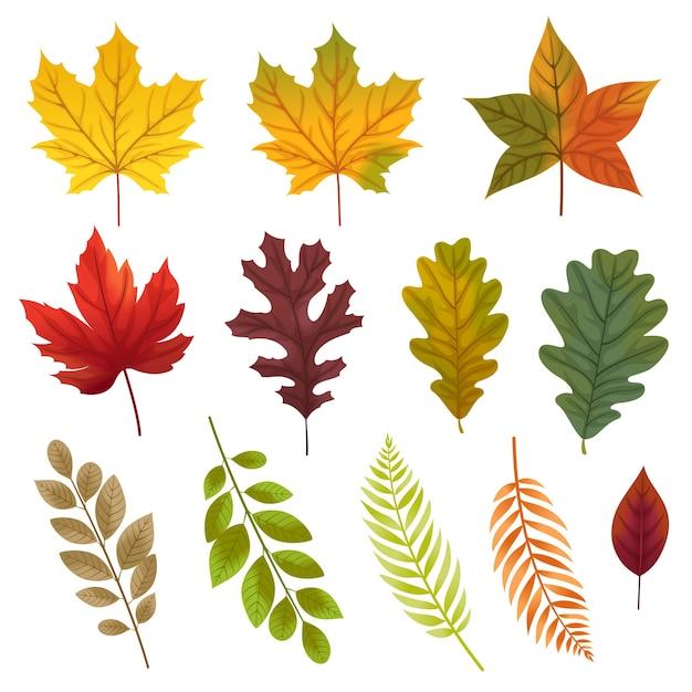 Set di icone con vari tipi di foglie. Vettore gratuito