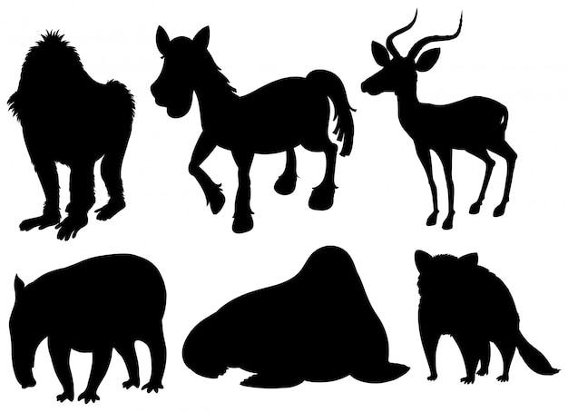 Set of illustration exotic animals Free Vector