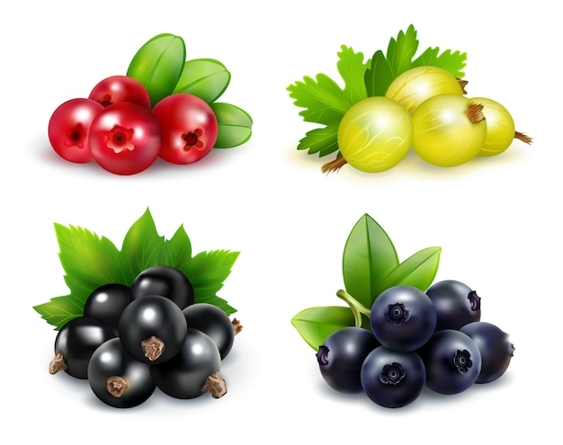 Set of isolated berry clusters in realistic style Free Vector