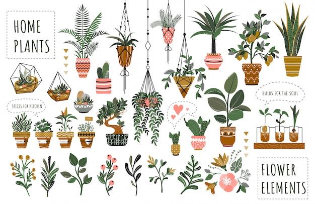 Set of isolated houseplants in flowerpots  illustration Premium Vector