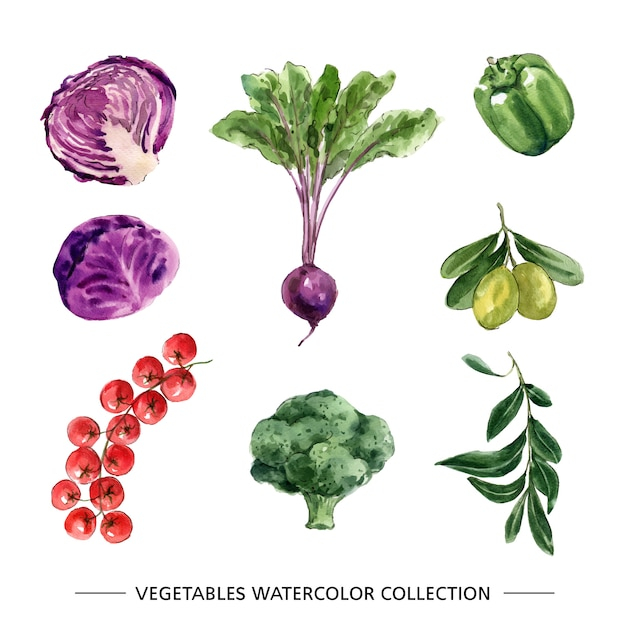 Set of isolated watercolor vegetable Free Vector