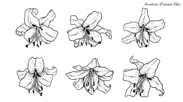 Set of lily Premium Vector