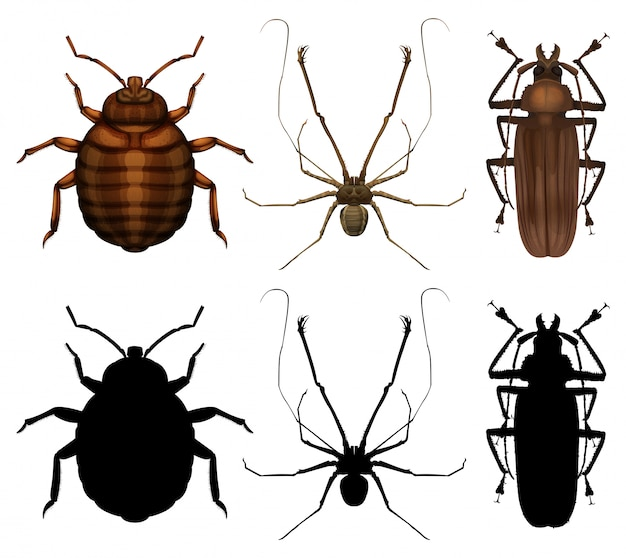 Set of many insect Free Vector