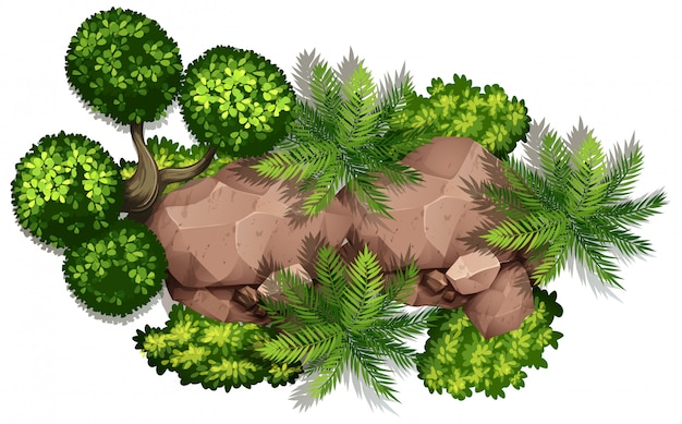 Set of nature rock and plant Free Vector