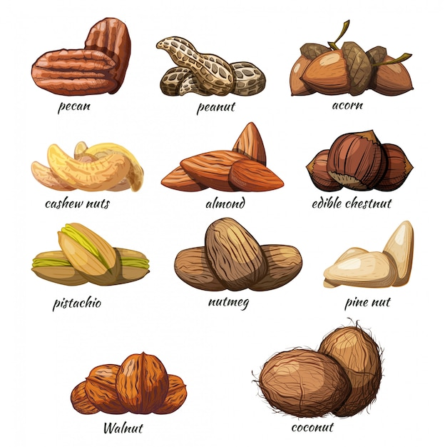 Set of nuts on a white background Premium Vector