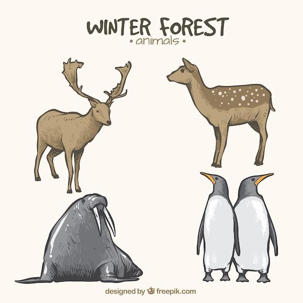 Set of animals in winter season