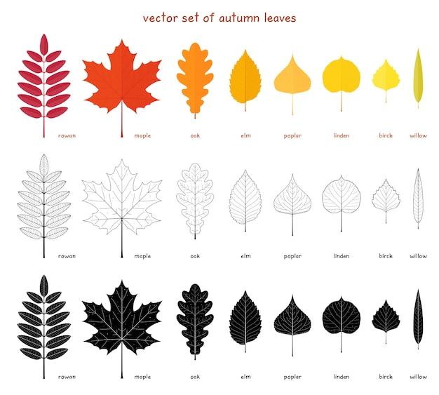 Набор осенних листьев. плоские элементы из разных деревьев. рябина, клен, дуб и вяз. тополь, береза, американская липа и ива. Premium векторы