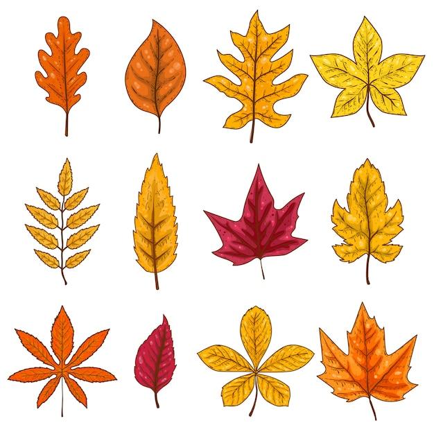 Набор осенних листьев на белом фоне. элемент Premium векторы