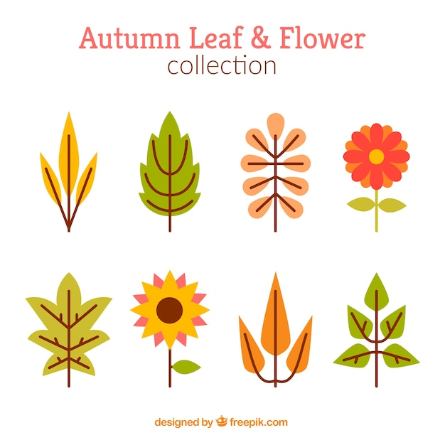 Set of autumnal leaves and flowers in flat\ design