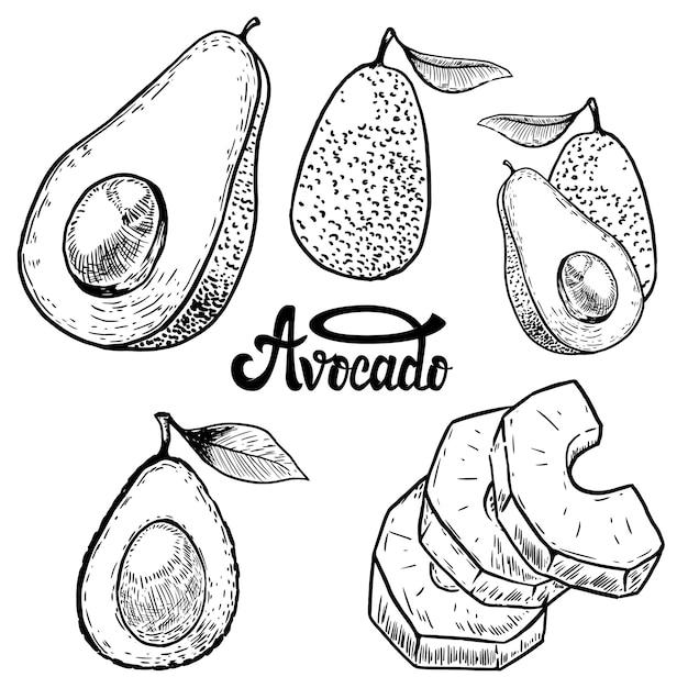 Набор иллюстраций авокадо на белом фоне. элементы для логотипа, этикетки, эмблемы, знака, плаката, меню. иллюстрации. Premium векторы