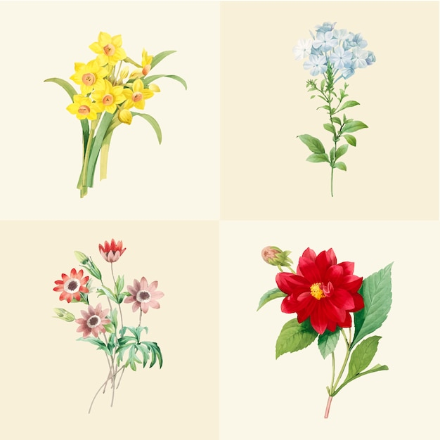 Набор красивых цветущих полевых цветов Бесплатные векторы