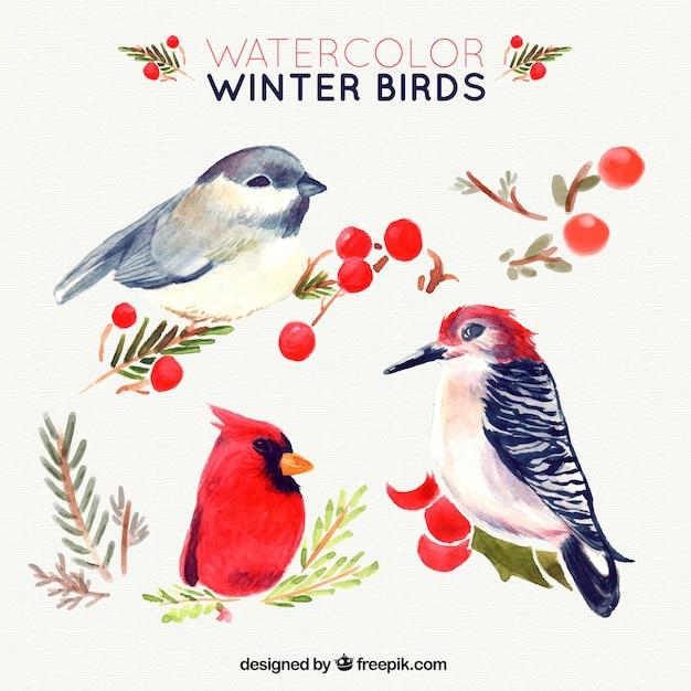 Set Of Beautiful Watercolor Birds Vector Free Download
