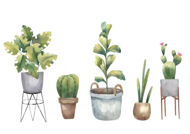 Набор кактусов, комнатных растений и суккулентов акварельной иллюстрации на белом фоне Premium векторы