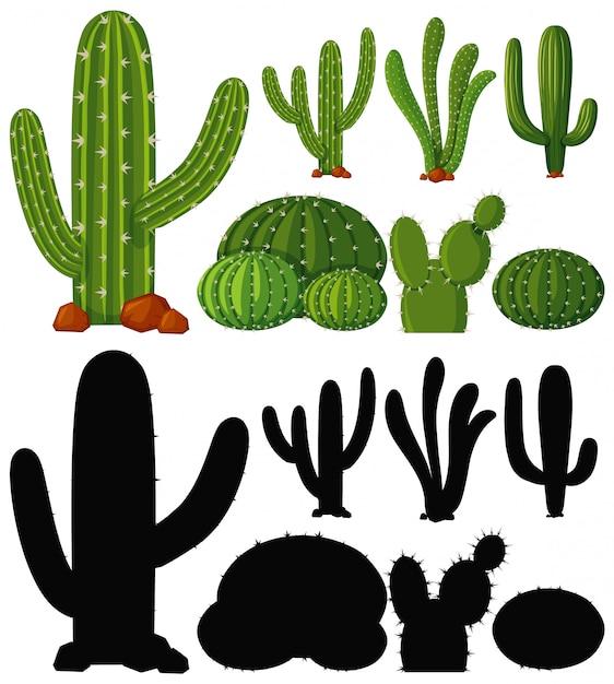 선인장 식물의 집합 무료 벡터