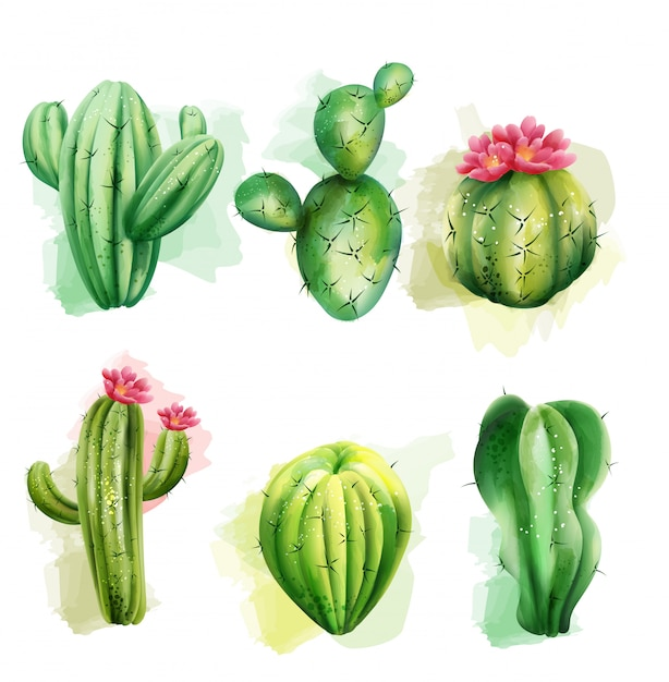 선인장의 집합입니다. 이국적인 식물 수집. 꽃과 선인장 무료 벡터