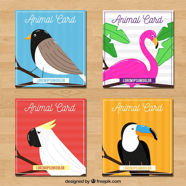 Set of cards with exotic birds