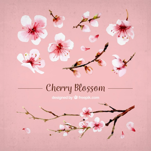 Set of cherry blossoms and watercolor branch Free Vector