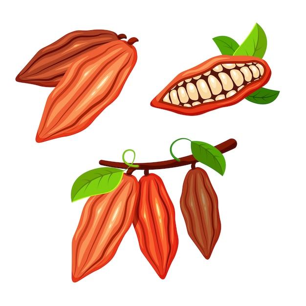 トレンディな漫画のスタイルのカカオ豆のセットです。チョコレートの木の果実。カカオの植物。あなたのデザインの食品コンセプト。 Premiumベクター