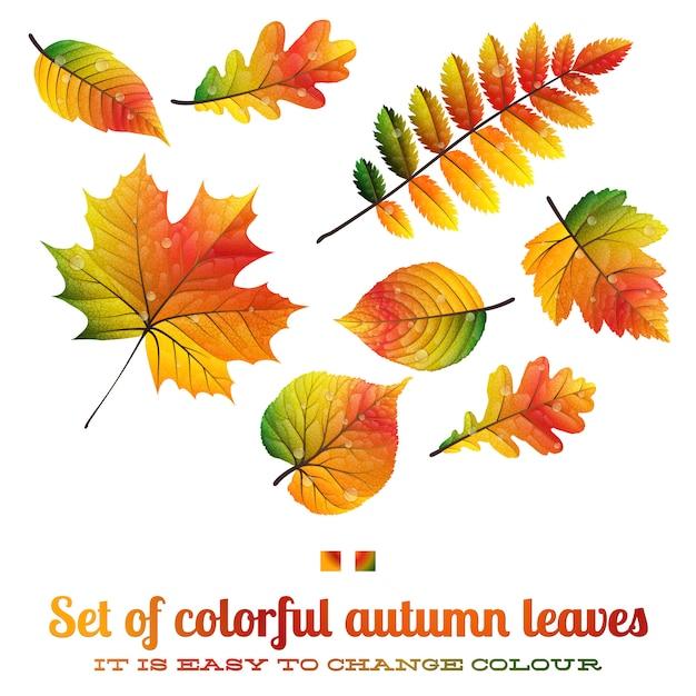色鮮やかな紅葉のセット Premiumベクター