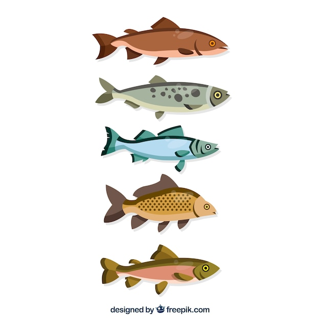 Set of colorful fishes in flat style