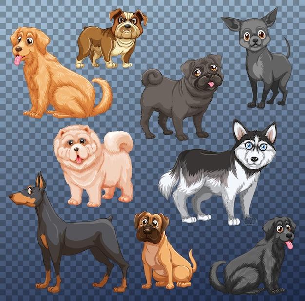 分離されたさまざまな犬のセット Premiumベクター