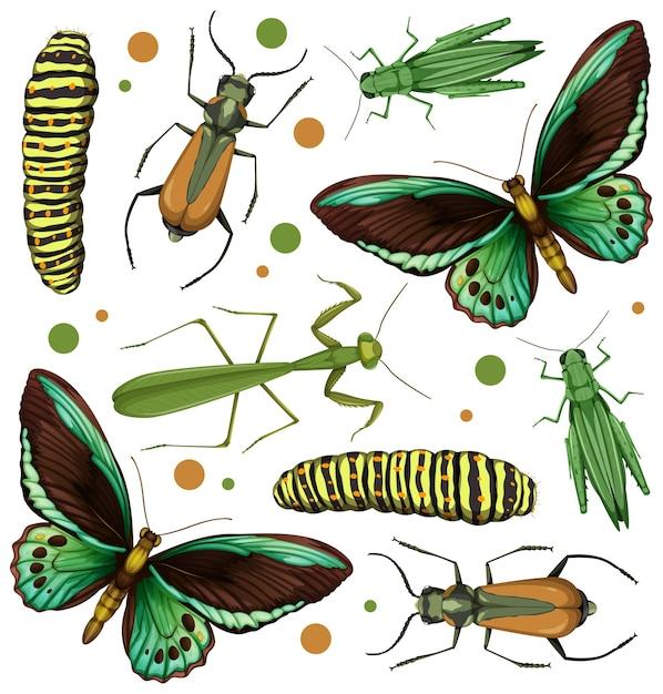 Набор различных насекомых Бесплатные векторы