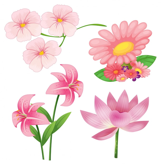Set of different kind of pink flowers on white\ background