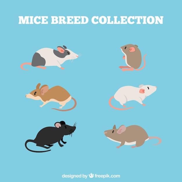 Набор различных пород мышей Бесплатные векторы