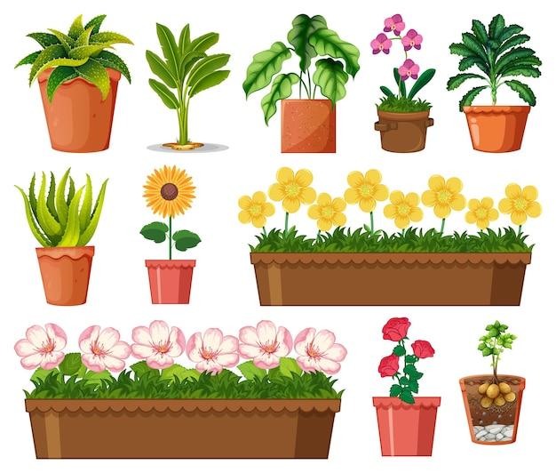 白い背景で隔離の鉢のさまざまな植物のセット 無料ベクター