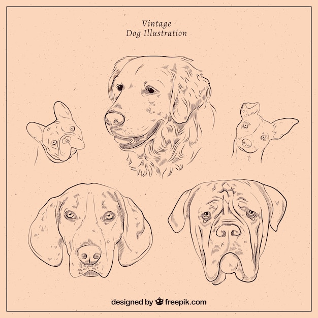 Set of dogs in vintage style