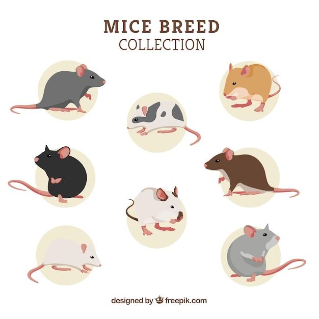 Набор из восьми пород мышей Бесплатные векторы