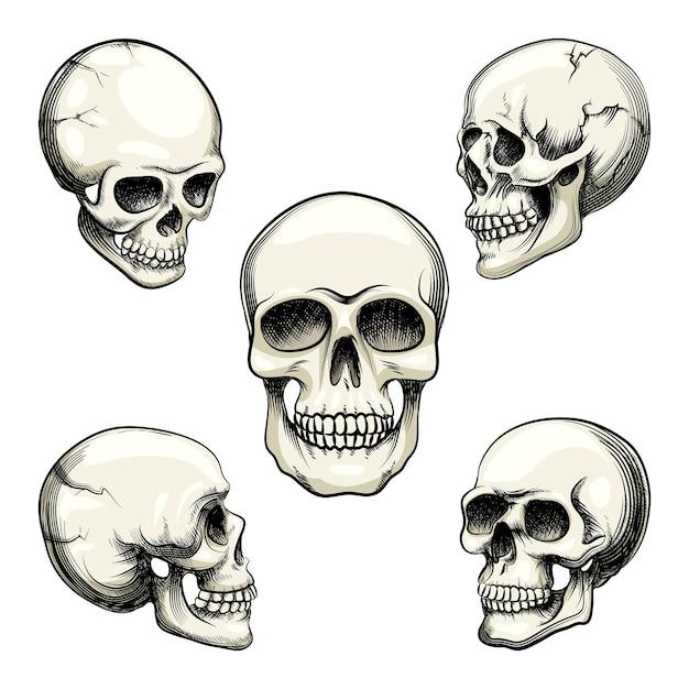 白で隔離の歯のベクトル図と自然主義的な人間の頭蓋骨の5つの異なるグレースケールビューのセット 無料ベクター
