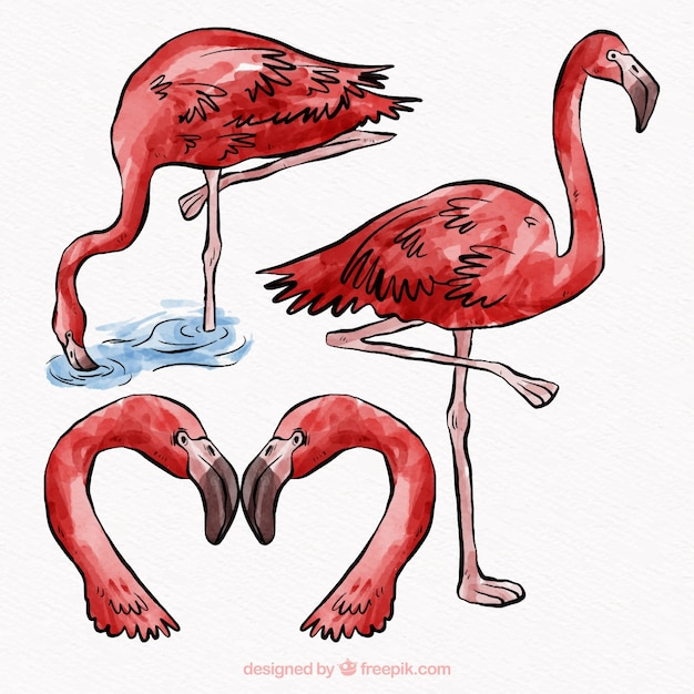 Set of flamingos in different postures Free Vector