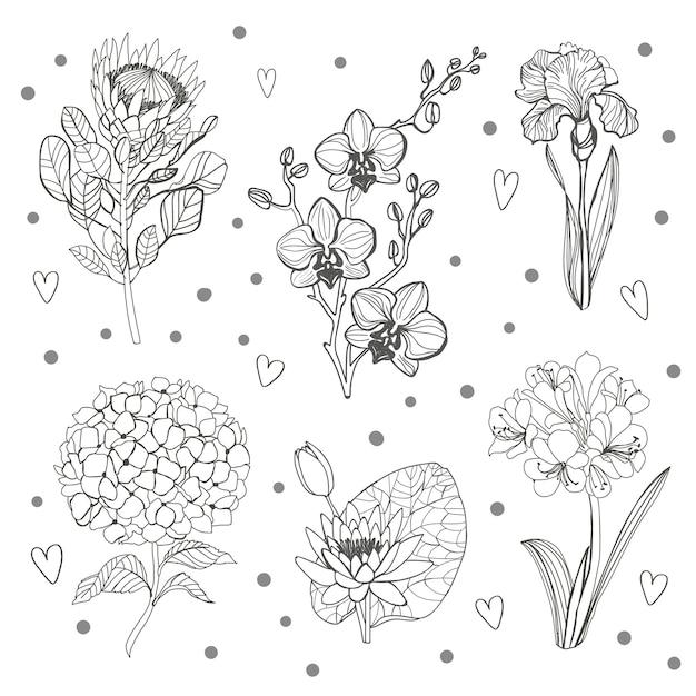 꽃 지점의 집합입니다. 꽃 개요 Hortenzia, Orhid, 홍채, Protea 및 녹색 잎. 프리미엄 벡터