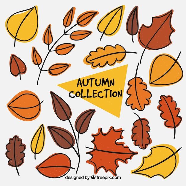 Set of hand drawn autumn decorative leaves