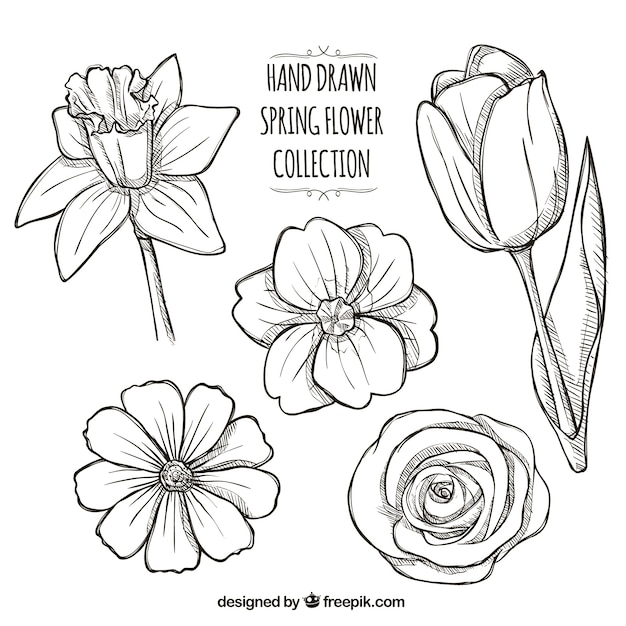 Set of hand drawn daisies vector free download set of hand drawn daisies free vector mightylinksfo