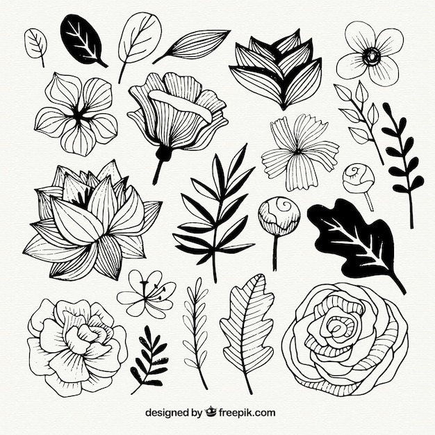 Set of hand drawn flowers and leaves Free Vector